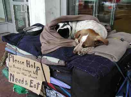 Why do Homeless People own Pets?